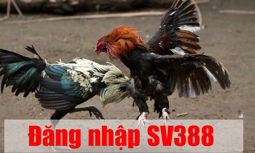 Link đăng nhập SV388