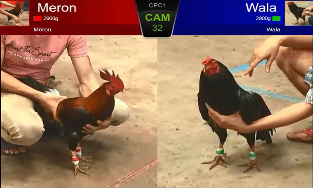 Meron - Đội gà của nhà cái