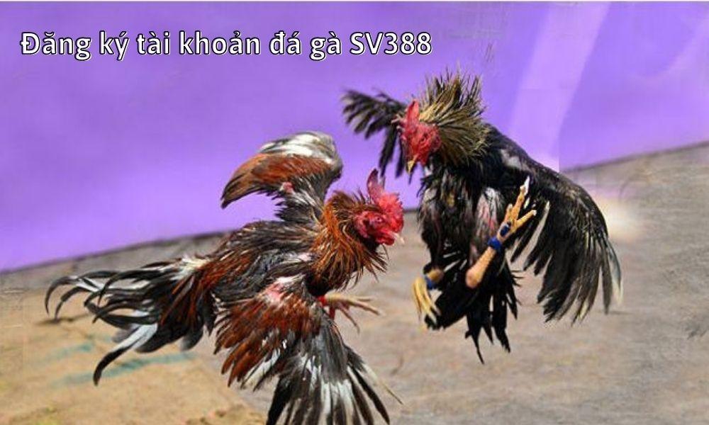 Đăng ký tài khoản đá gà SV388