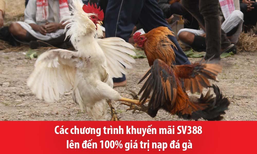 Các chương trình khuyến mãi SV388 lên đến 100% giá trị nạp đá gà