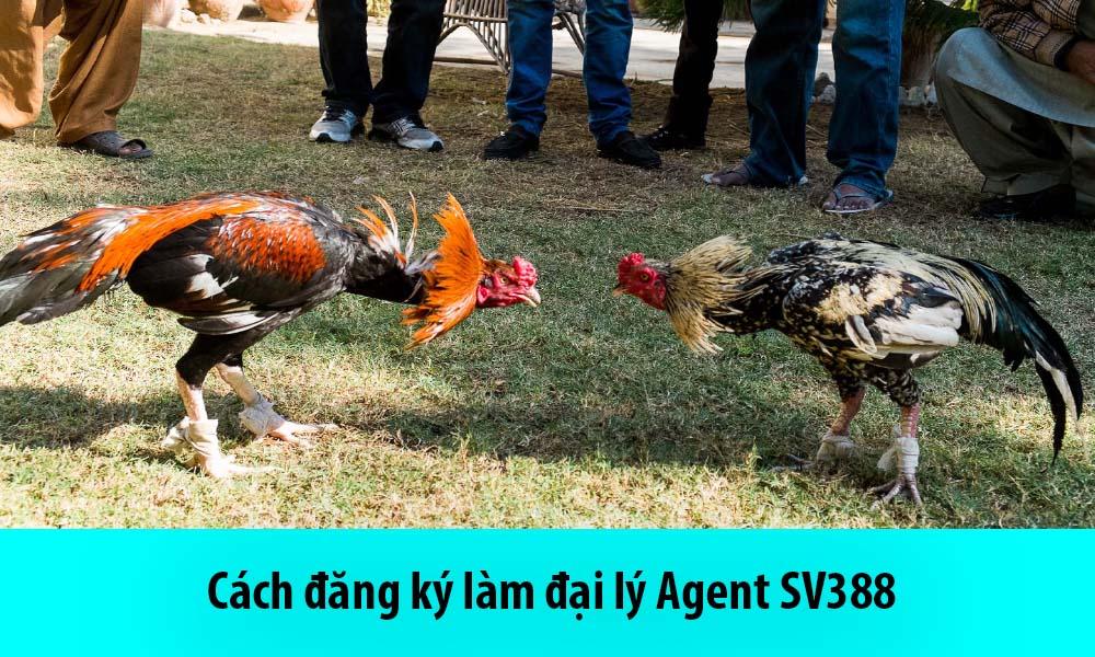 Cách đăng ký làm đại lý Agent SV388